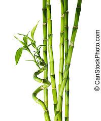 seis, tallos, -, bambú