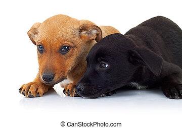 seitenansicht, von, zwei, abkommen, abirren, sich entfernen, richtung ändern, sich unterscheiden, junger hund, hunden, unten liegen