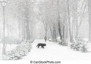 seizoen, sneeuw, eerst