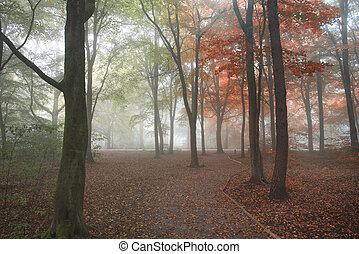 seizoenen wijzigend, van, zomer, in, herfst, herfst, concept, shown, in, een, bos, landscape, beeld