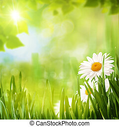 seizoenen, zomer, achtergronden, ontwerp, madeliefje, bloemen, jouw