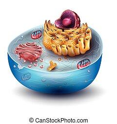 sejt, szerkezet