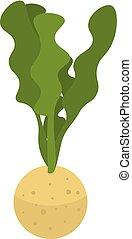 selderij, isometric, stijl, pictogram, plant