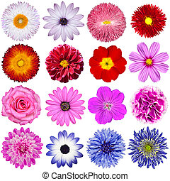 selección, de, vario, flores, aislado, blanco, plano de fondo