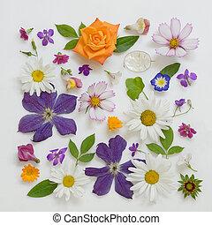 selección, de, vario, flores, aislado