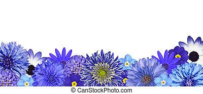 selección, de, vario, flores azules, en, fondo, fila, aislado