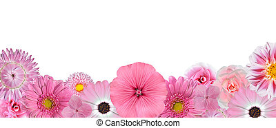 selección, de, vario, rosa, flores blancas, en, fondo, fila, aislado