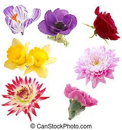 selección, flores, aislado