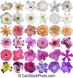 selección, grande, aislado, vario, plano de fondo, flores ...