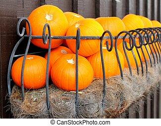 Selecetd pumpkins in iron fence