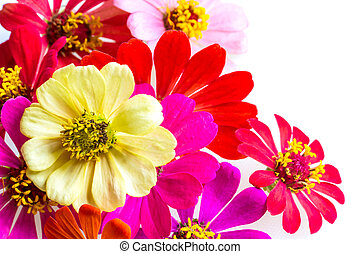 selectie, van, gevarieerd, bloemen, vrijstaand, op wit, achtergrond