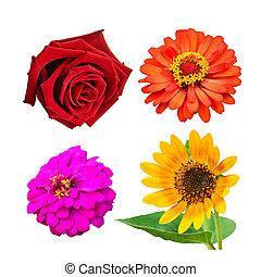 selectie, van, gevarieerd, bloemen, vrijstaand, op wit, achtergrond.