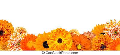selectie, van, gevarieerd, oranje bloemen, op, bodem, roeien, vrijstaand