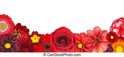selectie, van, gevarieerd, rode bloemen, op, bodem, roeien, vrijstaand