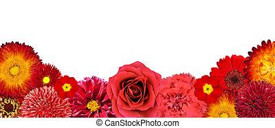 selectie, van, rode bloemen, op, bodem, roeien, vrijstaand