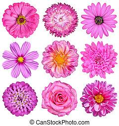 selectie, van, roze, witte bloemen, vrijstaand, op wit