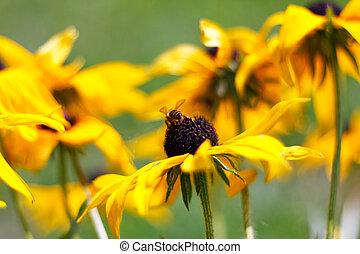 selectief, bloem, brandpunt, gele