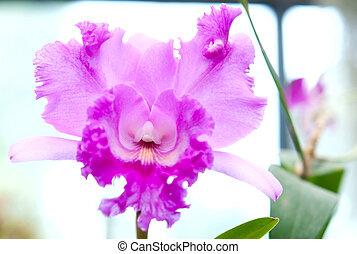 Selection beautiful orchid