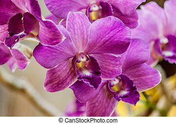 Selection beautiful orchid on blur background. Selective focus.