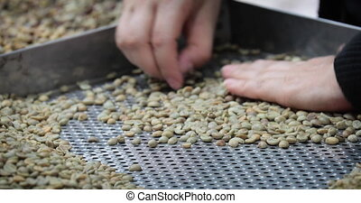 selection of coffee beans - women's hands in the factory...