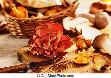 Selection of different fresh autumn mushrooms