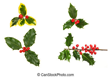Selection of sprigs holly with red ripe berries isolated against white
