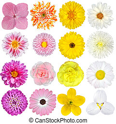 Selection of Pink, Orange, Yellow and White Flowers Isolated on White