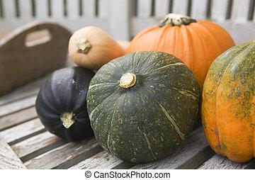 Selection of pumpkin and squash