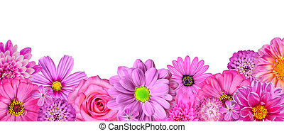 Selection of Various Pink White Flowers at Bottom Row Isolated on White. Nine Flowers - Daisy, Strawflower, Zinnia, Cosmea, Chrysanthemum, Iberis, Rose, Dahlia