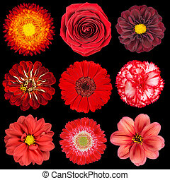 Selection of Various Red Flowers Isolated on Black