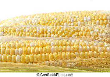 Selective Corn on the Cob - Selective focus on the ...