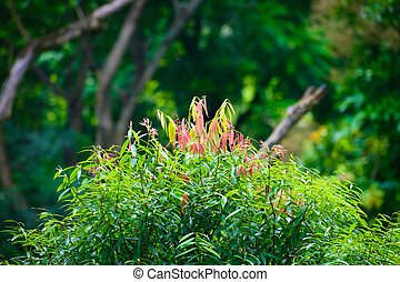Selective Focus: Beautiful pink, green and yellow leaves on blur forest greenery background.