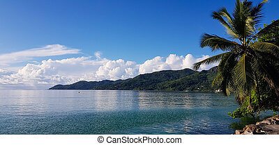 selective focus, nature with palm trees on the island