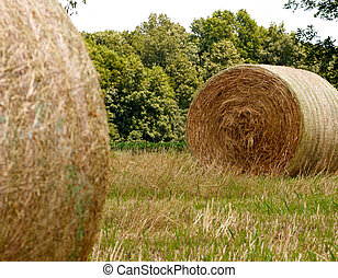 Selective focus on hay bale in a pasture