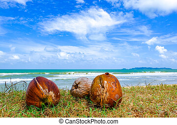 selective focus shot, coconut on green grass at the shore under cloudy and blue sky background