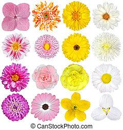 selekce, o, karafiát, pomeranč, podělanost i kdy běloba, květiny, osamocený, oproti neposkvrněný