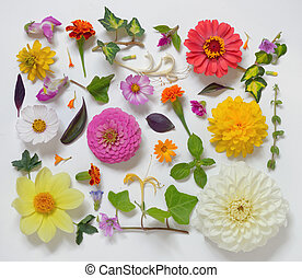 selekce, o, rozmanitý, květiny, osamocený