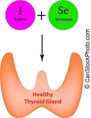 Selenium and Iodine are necessary for the normal functioning...