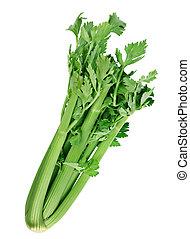 seler, roślina