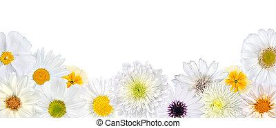 selezione, di, fiori bianchi, a, fondo, fila, isolato
