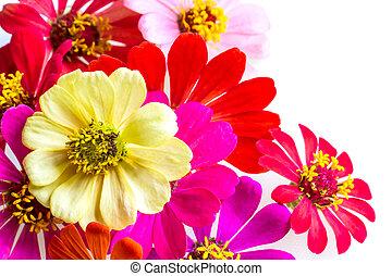 selezione, di, vario, fiori, isolato, bianco, fondo