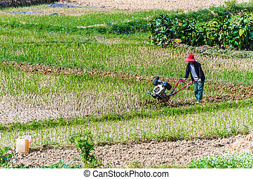 Self-sufficient farming in Ha Giang province, Vietnam - Self...