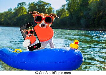 selfie, été, plage, chien