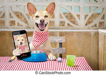 selfie, chien, affamé