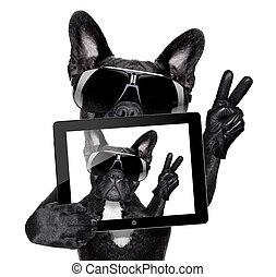 selfie, chien