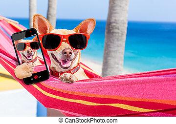 selfie, chien, hamac