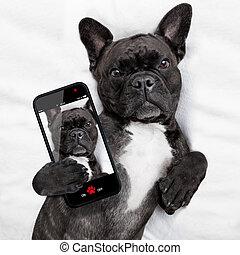 selfie, chien, lit