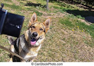 selfie, chien, obtenir