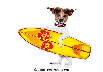 selfie, chien, surfer