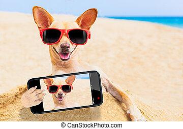 selfie, chihuahua, chien